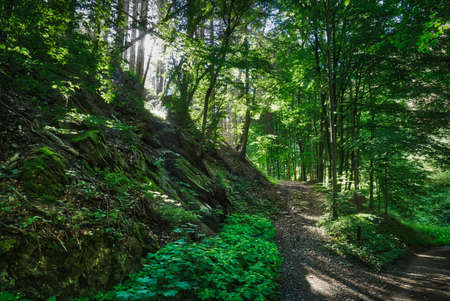 Forest track in the Wupper valley near Solingen Stok Fotoğraf