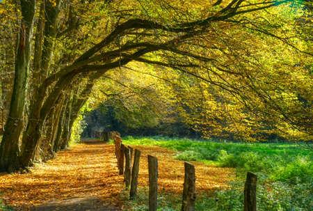 Forest trail near Haan Gruiten in autumn