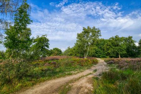 Hiking trail in the Wahner Heide heathland in summer
