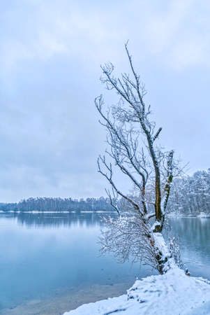 Tree and snowy banks of a lake in Duisburg in Germany