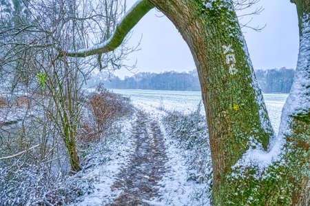 Field hiking trail near Huelchrath in winter Stok Fotoğraf