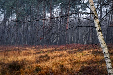 Tree and rain in the heathland of Solingen Ohligs