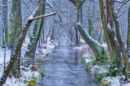 Winter forest and creek in Duisburg in Germany