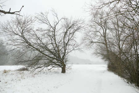 Winter in the Heisinger Aue shire near Essen