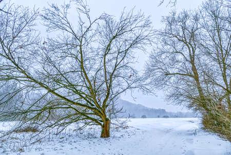 Snowy winter landscape in the Heisinger Aue shire near Essen