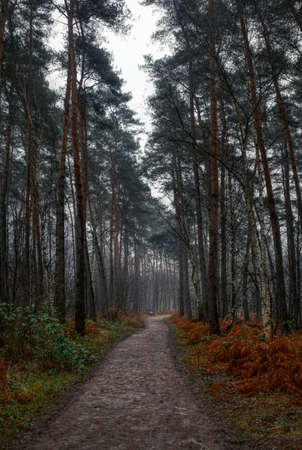 Hiking trail in the forest in the heathland of Solingen Ohligs