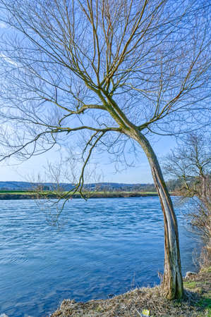 Tree by the river Ruhr in Essen Steele