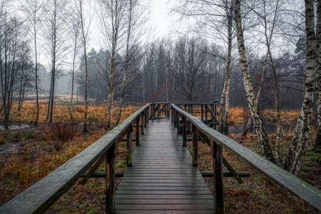 Walkway in a biotope in the heathland in Solingen Ohligs Stok Fotoğraf