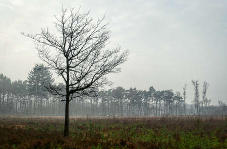 Tree and forest in the heathland in Solingen Ohligs