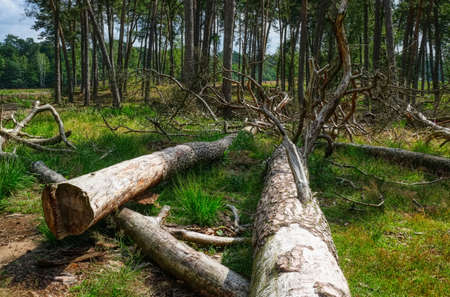 Fallen trees in the Diersfordt forest