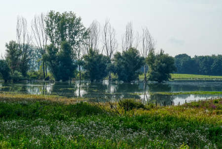 Lake landscape with trees in the Bislicher Insel nature reservation