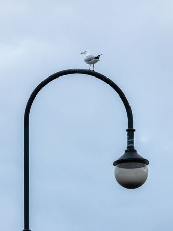 Seagull Perched on a Curved Street Light