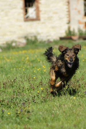 pet photography: running dog