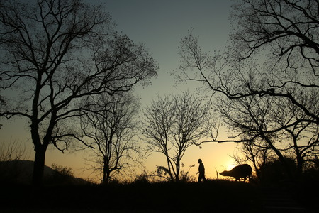 rancher: Rancher evening, the road home. Stock Photo