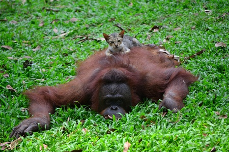 environmen: monkey and cat play together