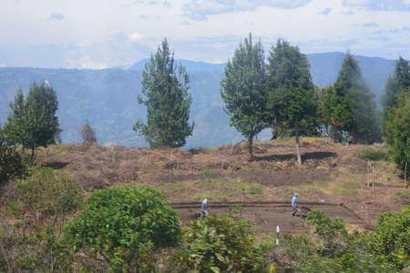 medellin: Farm near Medellin, Antioquia