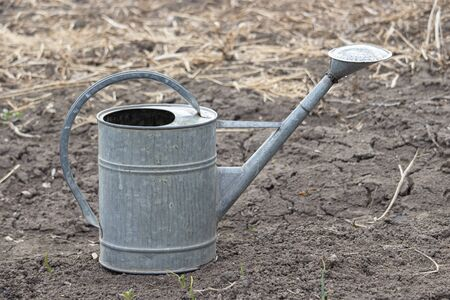 Old watering still iron can in garden on the ground. Simple vessel for drip irrigation of plants. Body, handle, spout and diffuser. Farm life in the village. Foto de archivo