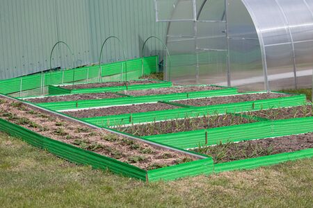 Garlic, strawberry and vegetable crop in green plastic frames. Raised beds in garden box in early spring. Herbs growing in container. Foto de archivo