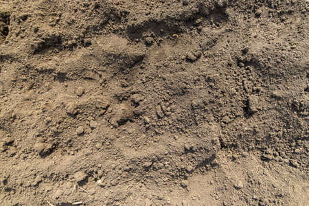 Dry ground texture top view. Dry soil in the garden. Concept of drought Foto de archivo
