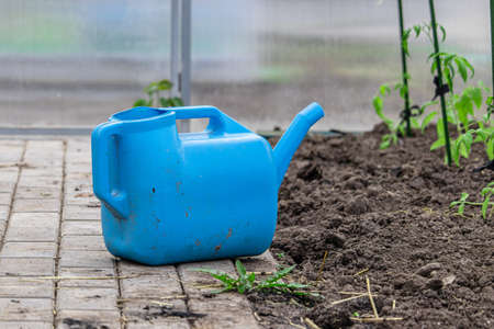 Blue plastic garden watering can next to the plowed land in greenhouse. Garden equipment for watering plants, vegetables and fruits Foto de archivo