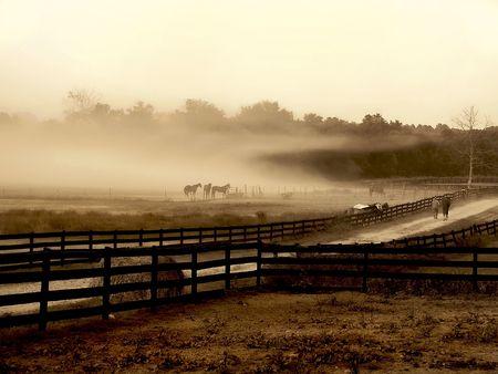 ranchito: Caballos de pie al borde de un campo en una nube de niebla aislados.