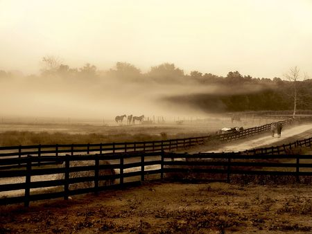 barn black and white: Horses standing at the edge of a field in a isolated fog cloud.