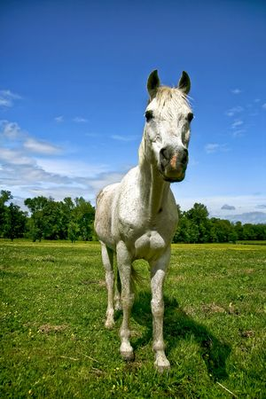 White horse standing in a field during spring time. photo