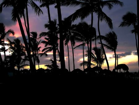 topical: Beautiful topical sunset viewed through a silhouette of palm trees. Stock Photo