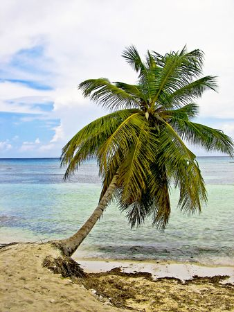 Palm tree leaning of the edge of an beautiful tropical shoreline. Imagens