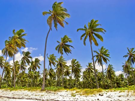 Palm trees lining the coast of a small tropical island. Stock Photo