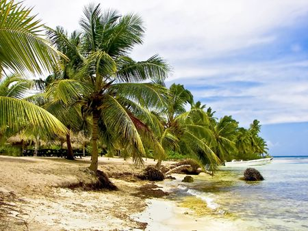 Tropical cove shoreline surrounded with palm trees.