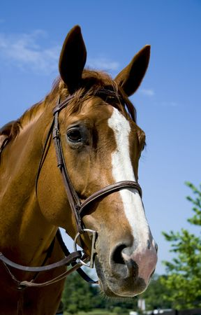 Portrait of horse wearing bridle. Stock Photo