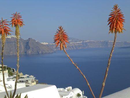 Beautiful orange and red flowers on balcony over looking the stunning village of Oia hanging from the cliffs in the volcanic island of Santorini, Greece