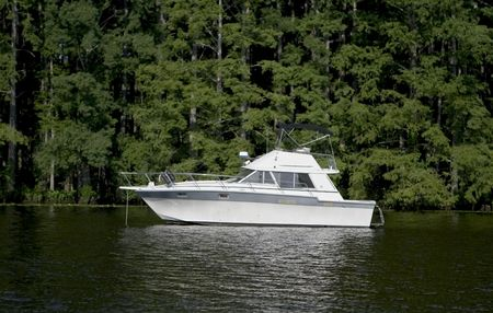 Large pleasure boat anchored next to a shoreline filled with green cypress trees.