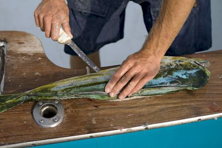 end of a long day: Man filleting a dolphin at the end of a long day of deap sea fishing. Stock Photo