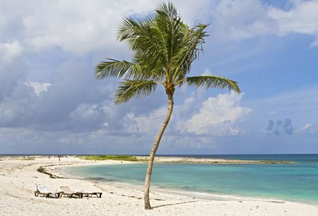 Palm tree on a tropical beach with beautiful green clear water. photo