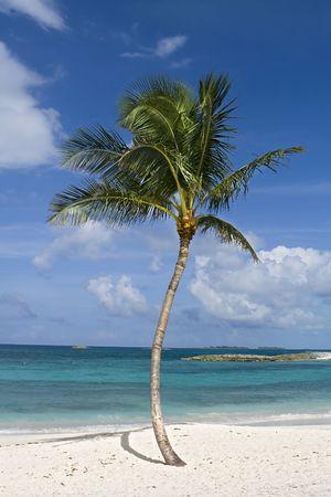 아름 다운 야자수 열 대 해변에서 파란색과 녹색 물 선택을 취소합니다.