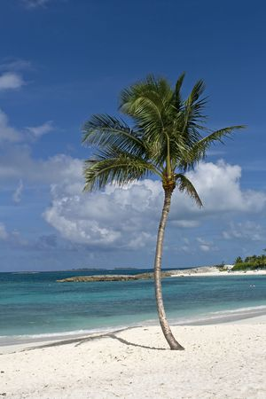 Palm tree on beautiful tropical beach with white sand and clear green water. photo