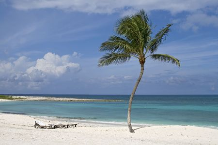 Palm tree on a beautiful tropical beach with white sand. photo