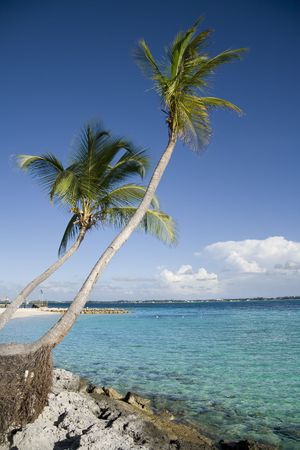 Beautiful tropical shoreline with two palm tree leaning over clear green water. photo