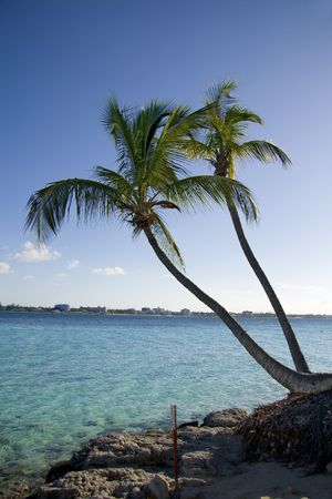 Beautiful tropical shoreline with two palm trees leaning over clear green water. photo