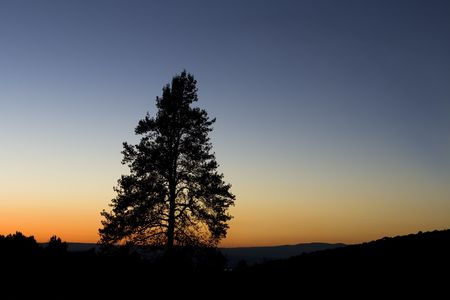 calming: Beautiful sunset with a silhouette of a pine tree.