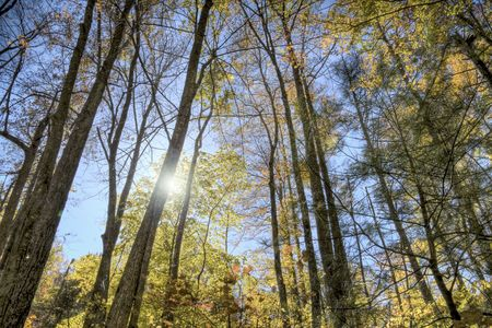 Tree tops in the middle of the forest during the middle of fall. Stock Photo - 4080658