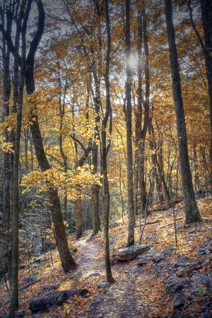 Beautiful hiking trail winding through a mountain during autumn. Stock Photo - 4167249