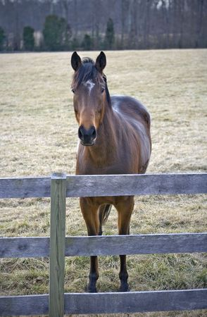 Horse standing at fence line of field with his ears forward. Stock Photo - 4634094