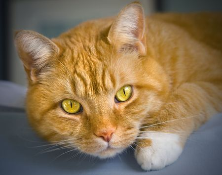 Orange colored tabby cat laying on the edge of a bed.