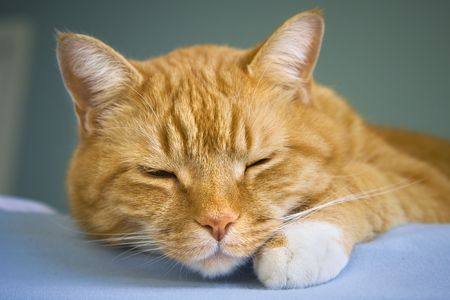 Orange colored tabby cat sleeping on the edge of a bed.