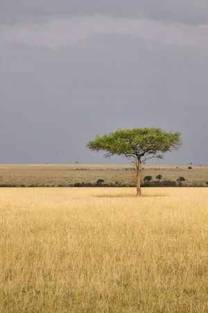 destination scenic: Single tree in the middle of vast African plains. Stock Photo