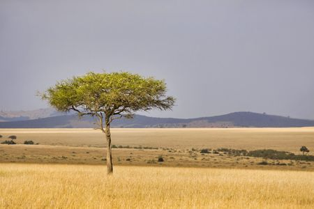 Single tree in the middle of vast African plains. photo