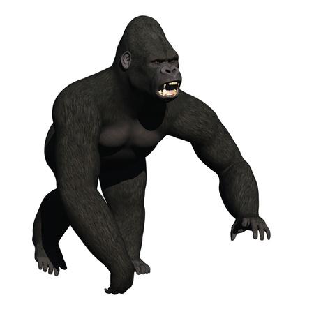 bared teeth: Snarling gorilla in aggressive posture Stock Photo